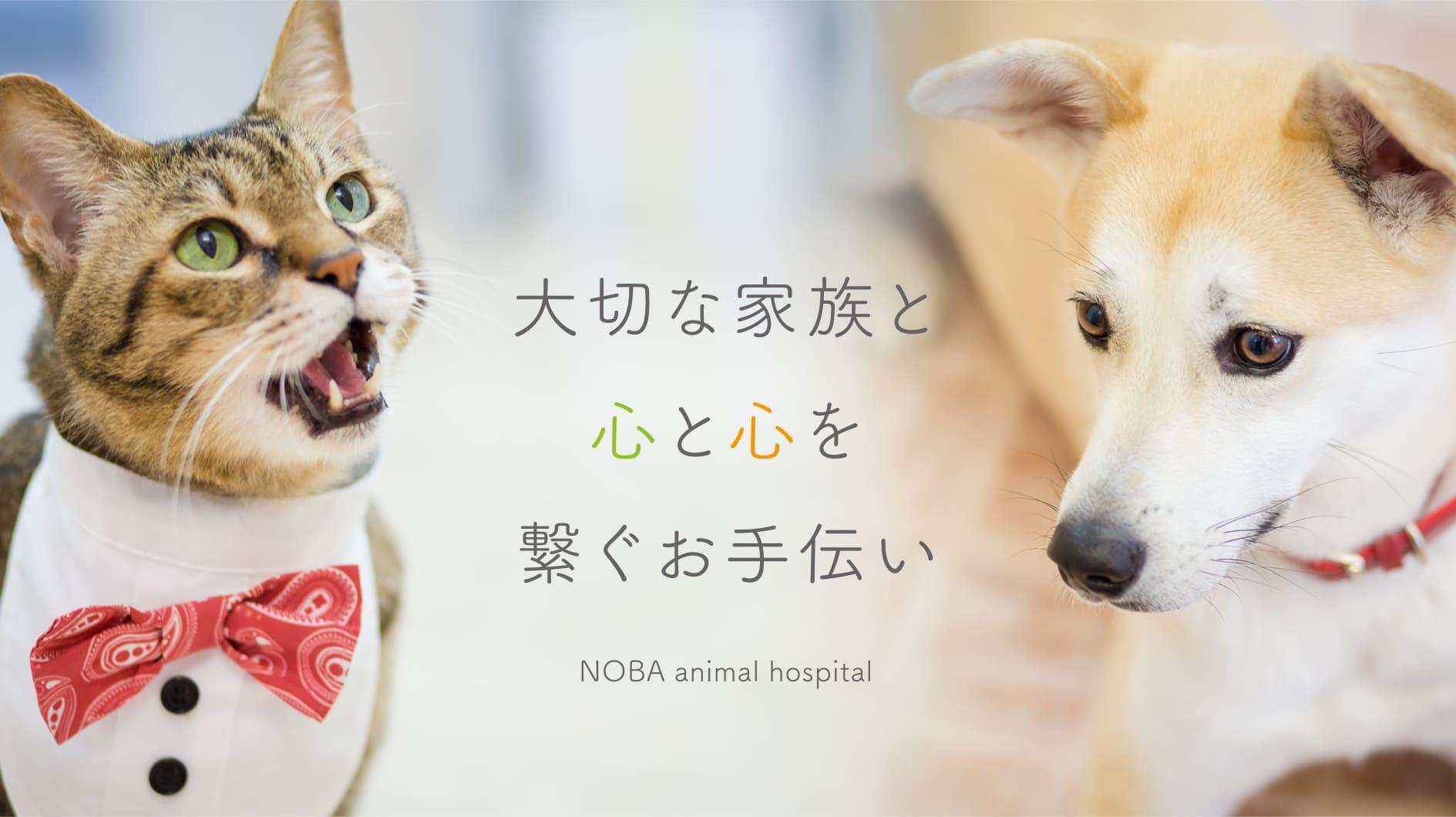 のば動物病院公式サイト リニューアル!